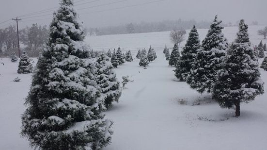 christmas_tree_lane_2